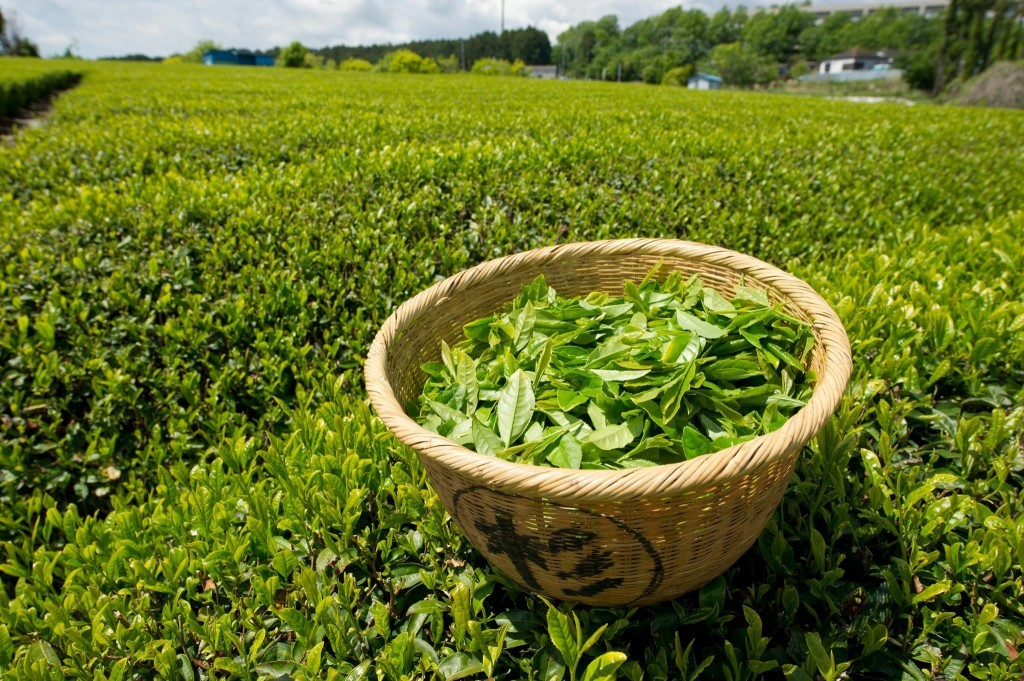 Why Green Tea Is The Most Important Drink In The World